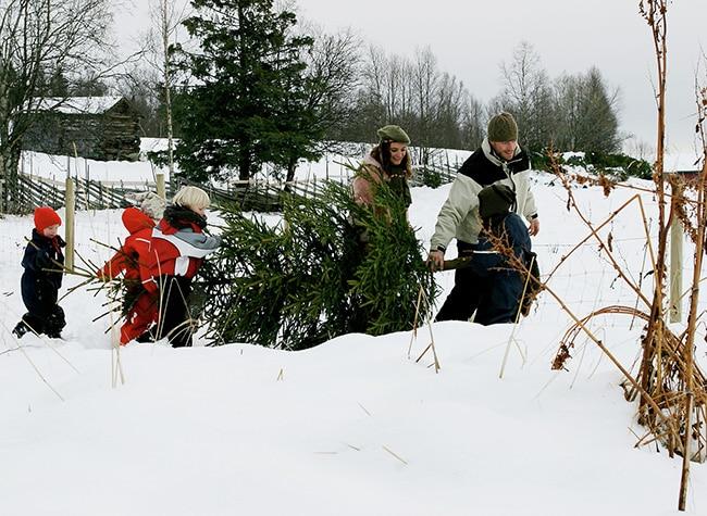 arbol-navidad-noruega