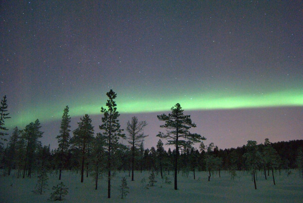 595 Auroras